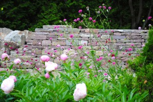 dry-stone-wall-with-flowers