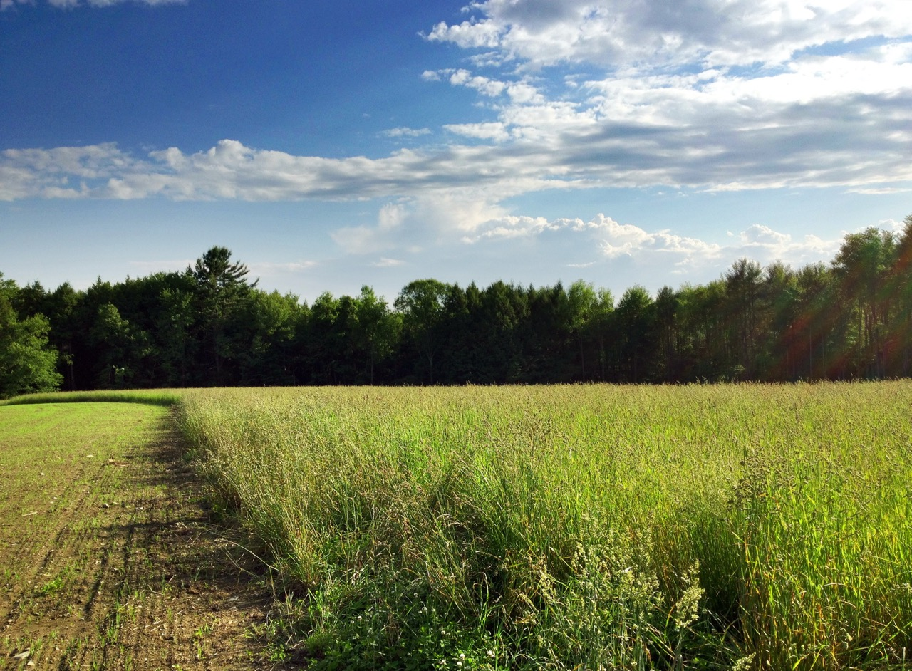 Beautiful Vermont Farm Land at the Workshop Site