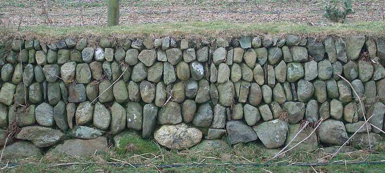 Figure 5, Clawdd in Tal 7 Bont Bangor