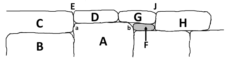 Figure 9, Two Stone Joints